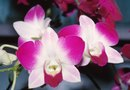 Orchid Care & Watering