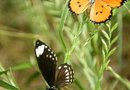 Safe Pest Control in a Butterfly Garden