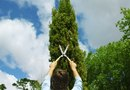 Correct Way to Plant Arborvitaes