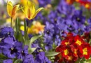 Ideas on Planting a Spring Window Box