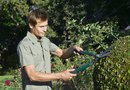 How to Trim a Ninebark Bush