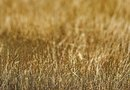Does Fertilizer Help Revive Dried-Up Grass?