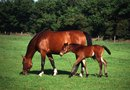 Toxic Grasses and Trees for Horses