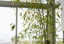 What Is the Best Potting Soil for Bamboo?