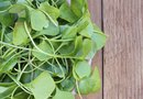 How to Grow Watercress at Home