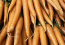 Does Eating Carrots Actually Increase Your Vision?