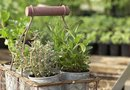 Tips for Lining a Garden Metal Planter and Protecting Roots From Heat