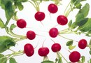How to Prevent Bugs in Radishes