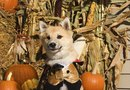 Are Decorative Gourds Poisonous to Dogs?