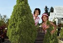 How to Grow Evergreen Trees Inside in Pots
