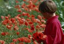 How to Trim Poppies