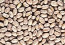 Do Pinto Bean Seeds Really Produce Pinto Beans?