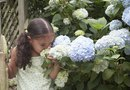 """How to Decorate Gardens With """"Annabelle"""" Hydrangeas"""