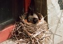 How to Keep Birds From Building a Nest Behind the Shutters