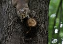 How to Get Rid of Pesky Squirrels From Trees