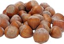 Does the American Hazelnut Need a Cross Pollinator?