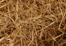 Straw Mulch in a Vegetable Garden