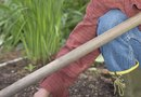 How to Prepare Soil for Planting Food Plots