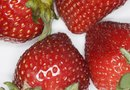 How to Know When Strawberries Are Ripe to Pick