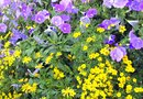 Bushes & Plants That Bloom From Spring to Fall