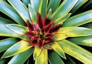 Tropical Plants With Green & Red Leaves