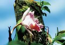 How to Care for an Epiphyte Orchid