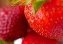 What Kind of Soil Should You Plant Eversweet Strawberries In?