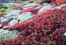 The Best Drought-Tolerant Ground Cover