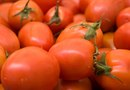 The Best Tomato Varieties for Potted Gardens
