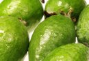 How Long to Harvest Guavas?