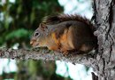Squirrel Deterrents for Trees