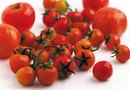 Are Tomato Plants Annuals?