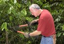 How to Treat Mesquite for Borers
