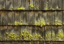 How to Kill Moss on Siding