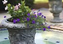 How to Build an Urn Garden