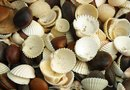 How to Decorate a Chandelier With Seashells