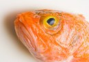 Mercury Levels in Orange Roughy