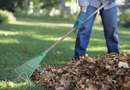 Purpose of Raking Leaves