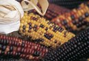 How to Plant Indian Corn in the Fall