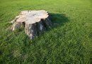 How to Make a Hypertufa Container on Top of a Tree Stump