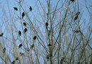 How to Get Rid of Flocking Birds in Trees