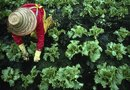 How to Plant & Grow Seasonal Vegetables