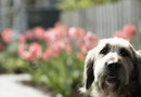 How to Prevent Pets from Destroying Flowerbeds