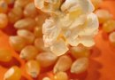 The Healthy Benefits of Popcorn