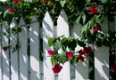 How to Cut Bougainvillea Growth Back to the Ground