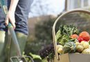 When to Plant a Cool-Weather Vegetable Garden