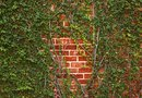 How to Decorate an Outdoor Brick Retaining Wall