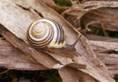 How to Control Snails Naturally