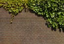 How to Remove Ivy Without Damaging Brick