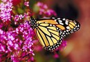 How to Prepare a Butterfly Garden